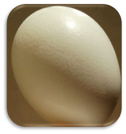 Garbhakranti egg during pregnancy