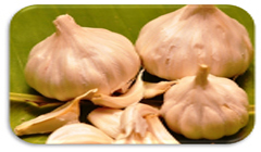 Garlic increases vitality.