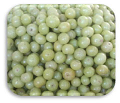 Indian Gooseberry (Amla) (Emblica Officinalis)