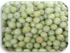 Indian Gooseberry (Amla) (Emblica Officinalis):